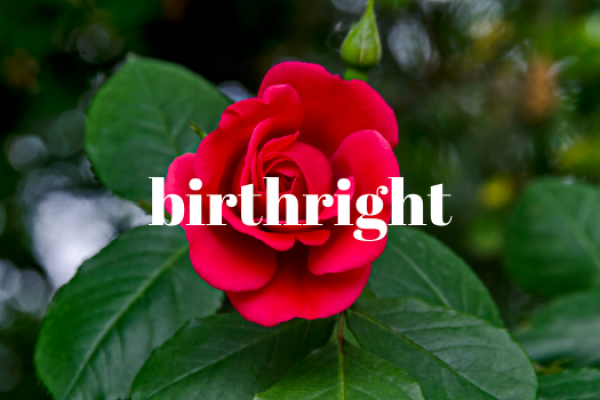 Birthright of Delaware Annual Mother's Day Rose Sale<br>May 7th-9th